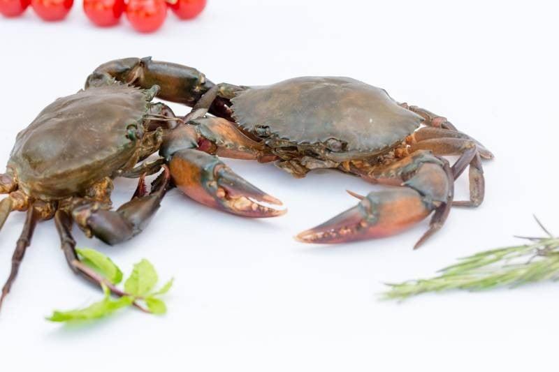 Mud Crab (Medium)