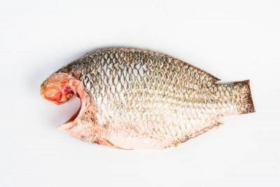 False Tilapia / Jalebi Fish (Large) - Whole Cleaned