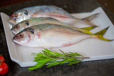 Trevally / Vatta (Small)