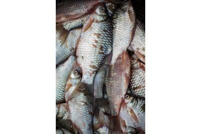 Bhadi Puti Maach / Pool Barb Fish - Whole