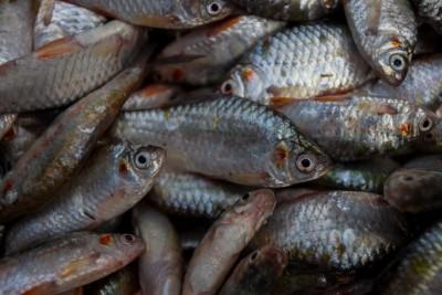 Desi Puti Maach / Pool Barb Fish