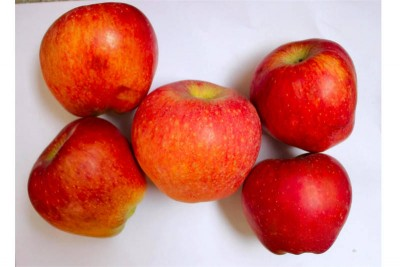 Apple Kashmir Deliciouse