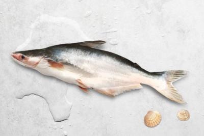 Fresh Indian Baasa / Pangasius - Whole