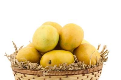Mango - Badami