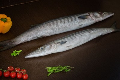 Barracuda / Cheelavu (Small) - Whole