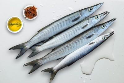 Barracuda / Cheelavu (Medium) - Whole