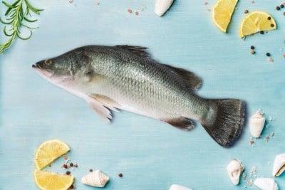 Bhetki /ভেটকী/ Barramundi / Asian Seabass / Kalanji