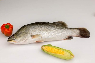 Bhetki /ভেটকী/ Barramundi / Asian Seabass / Kalanji - Whole