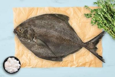 Black Pomfret / Karutha Avoli (300g to 700g) - Whole