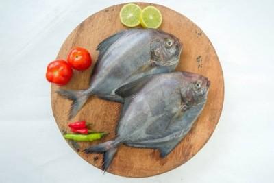 Black Pomfret / Karutha Avoli / Halwa Fish (700g to 3kg)