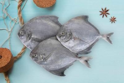 Black Pomfret / Karutha Avoli / Halwa Fish (100g to 300g) - Whole