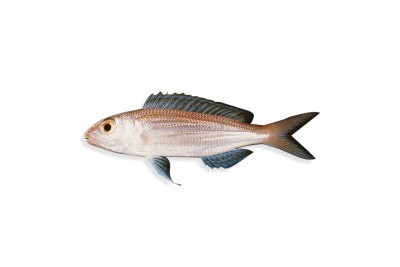 Bleekers Threadfin Bream - Whole