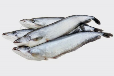 Boal Fish / Attu Vaala / Malli - Whole