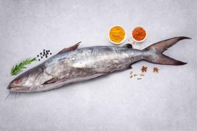 Marine Catfish / Etta Koori (Medium)