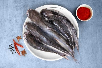 Marine Catfish / Etta Kunju