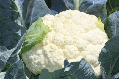 Cauliflower - 1 unit