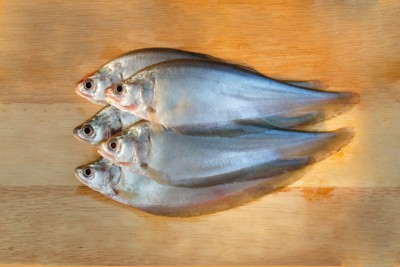 Chitol / Chitala / Knifefish (Small)