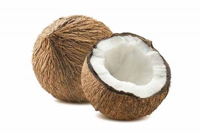 Coconut - Medium