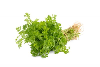 Coriander Leaf Bunch