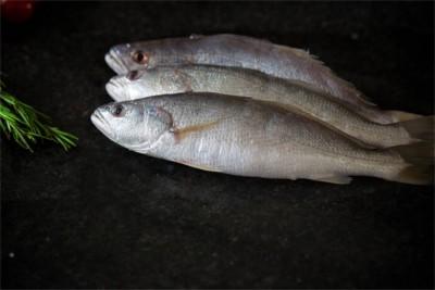 Silver Croaker / Kora / Ghol Fish (Large)