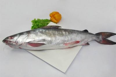 Large Catfish / Etta Koori - Whole