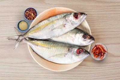 Finletted Mackerel / Kanni Ayala (Medium / Large)