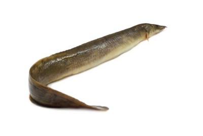 Freshwater Eel / Aral / Aran - Whole