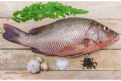 Freshwater Red Snapper / Chempalli - Whole