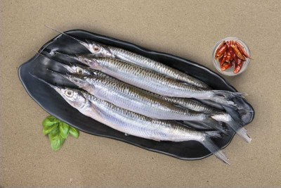 Garfish / Kola (Extra Small) - Whole