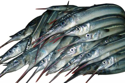 Garfish / Kola (Large) - Whole