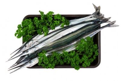 Garfish / Kola (Large)