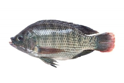 Gift Tilapia - Whole