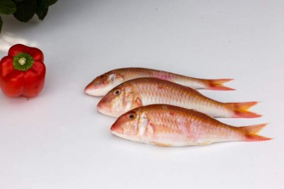 Premium Bream / Goat Fish