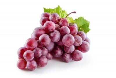 Grapes Red (ZA) / عنب أسود إفريقي