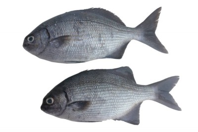 Gray Snapper - Whole