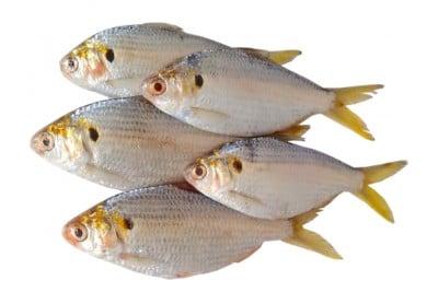 Greenbacks / Scaled sardine / Kanna Mathi