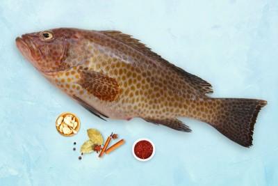 Grouper / Reef Cod / Kalava (Large) - Whole