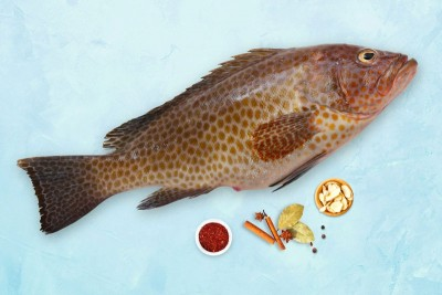 Grouper / Reef Cod / Kalava (Large) - Whole