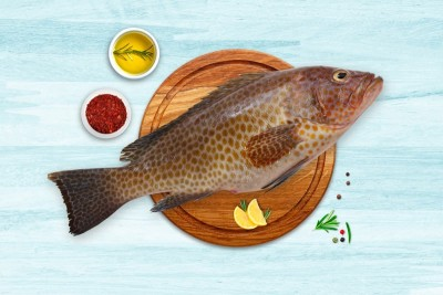 Grouper / Reef Cod / Kalava (Medium)