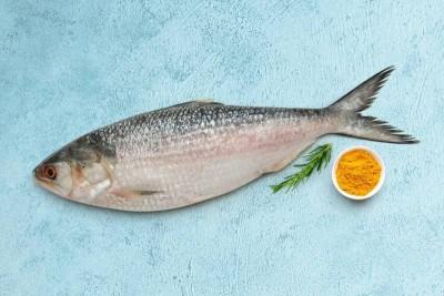 Hilsa / Ilish - (Whole Fish Size 1.2kg-1.3kg) (Cleaned, Bengali Round cut)  1pc
