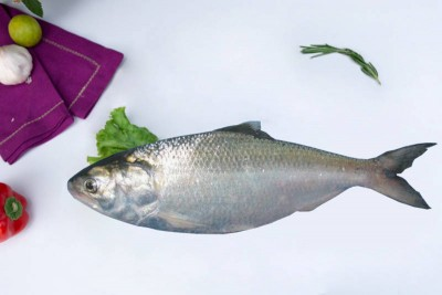 Hilsa / Ilish (300g to 450g) - Whole (Not Cleaned)