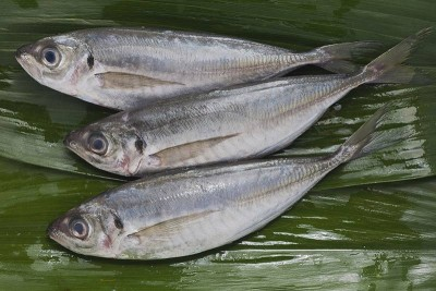 Horse Mackerel / Ayala Para / Vankada - Whole