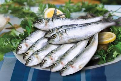 Premium Sardine / Mathi (Small)