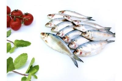 Thorny Sardine / Fringescale sardinella / Carrie Chala Mathi