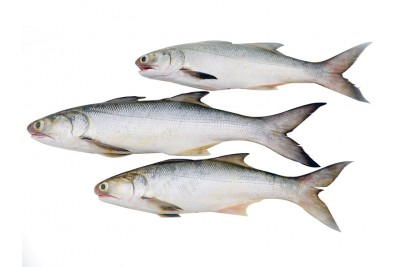 Indian Salmon / Vazhmeen / Raavas / Gurjali (Large)