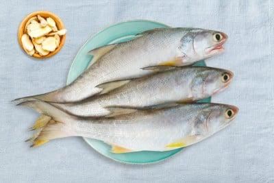 Indian Salmon / Vazhmeen / Raavas / Rawas / Gurjali/ গুরজালি  (Large)