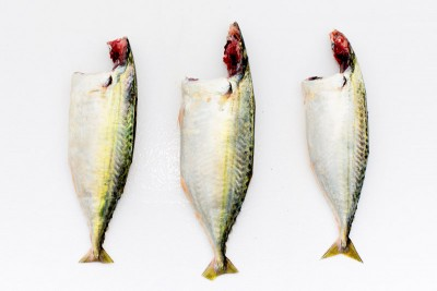 Indian Mackerel / Ayala / Bangda (Small) - Whole Cleaned (includes head pieces)