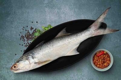 Indian Salmon / Vazhmeen / Raavas / Gurjali (Large) - Whole