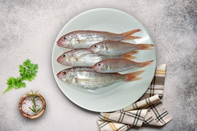 Indian White Perch / Vella Kilimeen