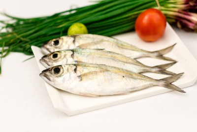 Finletted Mackerel / Kanni Ayala (Medium / Large)